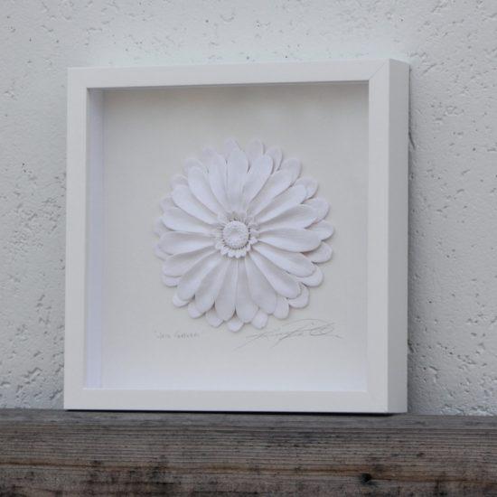 whitegerbera scaled image